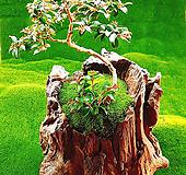 다육식물 천연나무화분 L|