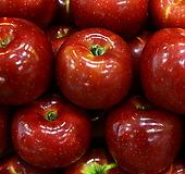 추억의 홍옥 화분상품♥자가수정 왜성 사과나무♥왜성사과♥|