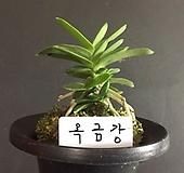 옥금강/풍란/난/석곡/동양란/서양란/나라아트 