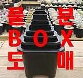 사각플분 BOX도매, 사각플라스틱화분, 튼튼화분, 화분, 플분, 플라스틱화분|