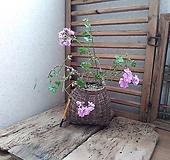 #(귀품,그린아이즈)아이비제라늄-(고재)바구니 Geranium/Pelargonium