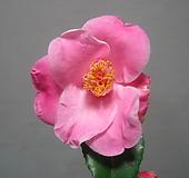 꽃대 가득~항구의 새벽,향동백3413-외목대,동일품배송 