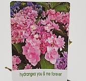 수입목수국#3(Hydrangea you & me forever) Hydrangea macrophylla