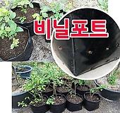 [흑비닐 포트 )] 묘목 재배용, 비닐포트, 연질재질|