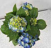 수국(대품) Hydrangea macrophylla