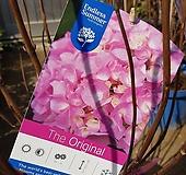 정원수국/오리지날수국/핑크수국 Hydrangea macrophylla