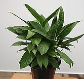 스파트필름/공기정화식물|