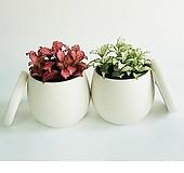 화이트스타 화분SET 실내 공기정화식물 
