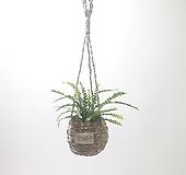 더피고사리 (소) 행잉 바구니 *쟈스민 식물*|