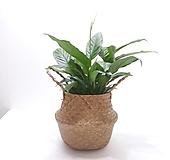스파트필름 (중) 해초 바구니 *쟈스민 식물*|