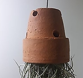 토분수염 (소) *쟈스민 식물* 