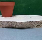 통나무슬라이스(박쥐란,틸란드시아용)xp-4636|