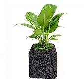 스파트필름 숯화분 미니화분 공기정화식물|