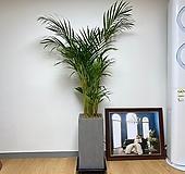 아레카야자 대형 테라조 그레이 사각|
