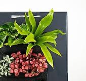 화이트스타1개+레드스타2개+스킨답서스2개+아비스1개 식물액자용 공기정화 식물 패키지 