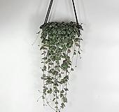 러브체인 대품 공기정화식물 행잉플랜트 한빛농원 |