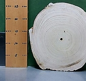 통나무슬라이스(박쥐란,틸란드시아d.i.y용)sp-4674|