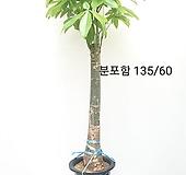 파키라 대품/동일품배송  