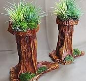 [돌과뿌리] 틸란드시아 마블|