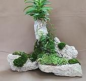 [돌과뿌리] 자연석 소엽풍란 석부작|