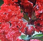 목백일홍/다이나마이트|