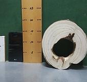 박쥐란,틸란드시아용 통나무(오동나무)xp-4713|