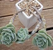 묵둥이 러블리로즈|Echeveria Lovely Rose